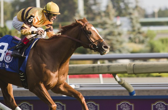 Wise Dan sprints ahead of the pack towards the finish line at the RICOH Woodbine Mile