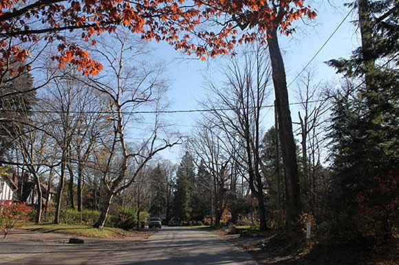 City plans to install sidewalks along Chine Drive in Scarborough are on hold thanks to community opposition. Installing the sidewalks would mean cutting a line of century-old trees on the street, which has historical ties to the Group of Seven.