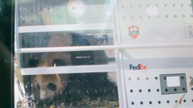 Panda Da Mao peeks at Toronto Monday March 25 through the special Federal Express container at Pearson Airport