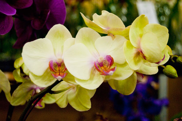 These feminine yellow and pink orchids were a hit at the event.