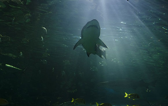 Sharks, eels and stingrays are some of the 450 species that can be found at Ripley's Aquarium of Canada