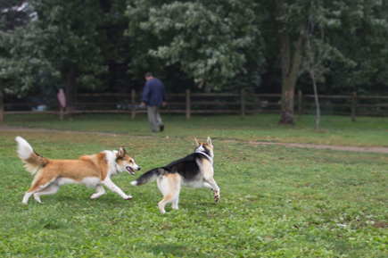 Two dogs play in the off-leash area in Thomson Memorial Park. By summer 2014, the dog park will be one acre larger and three new parks for dogs will be ready, Councillor Glenn De Baeremaeker says.