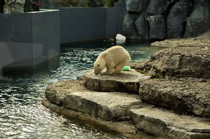The Toronto Zoo prepares for the departure of the one-year-old bear Humphrey