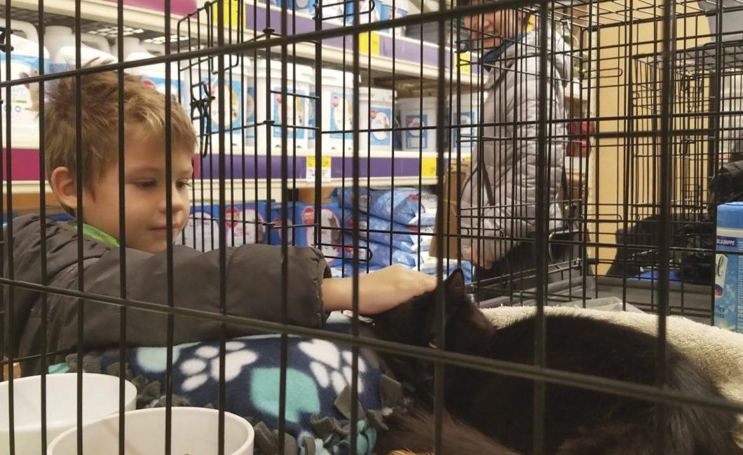 Boy petting cat